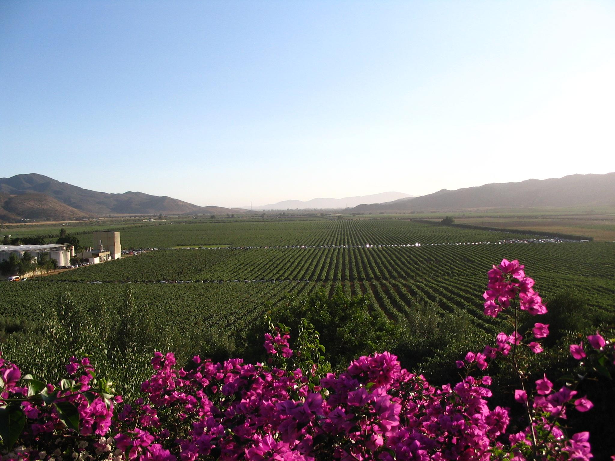 Región vinícola del Valle de Guadalupe