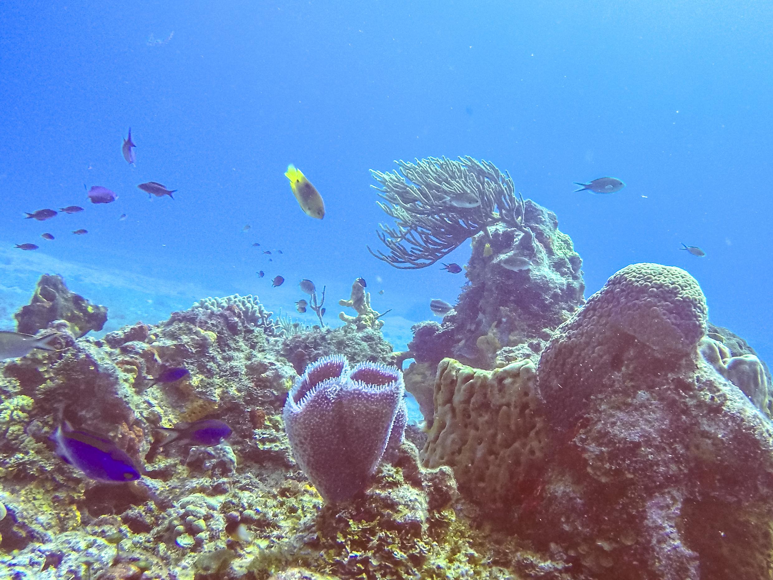 Arrecifes en la isla de Cozumel